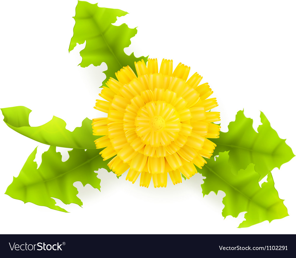 Yellow dandelion vector | Price: 1 Credit (USD $1)