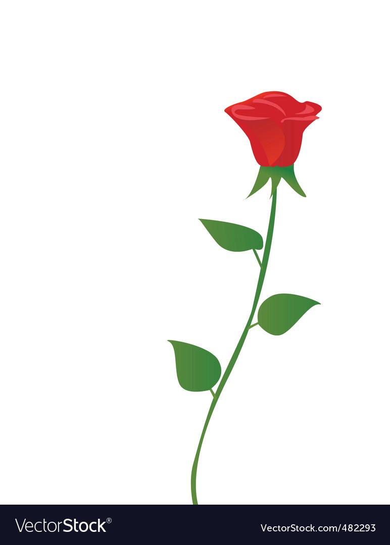 Rose vector | Price: 1 Credit (USD $1)