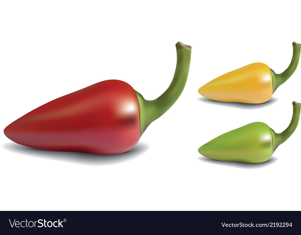 Pepper vector | Price: 1 Credit (USD $1)