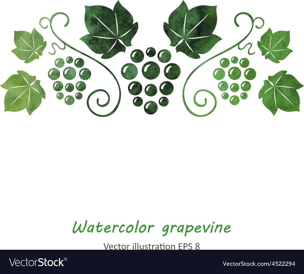 Watercolor style green grapevine vector | Price: 1 Credit (USD $1)