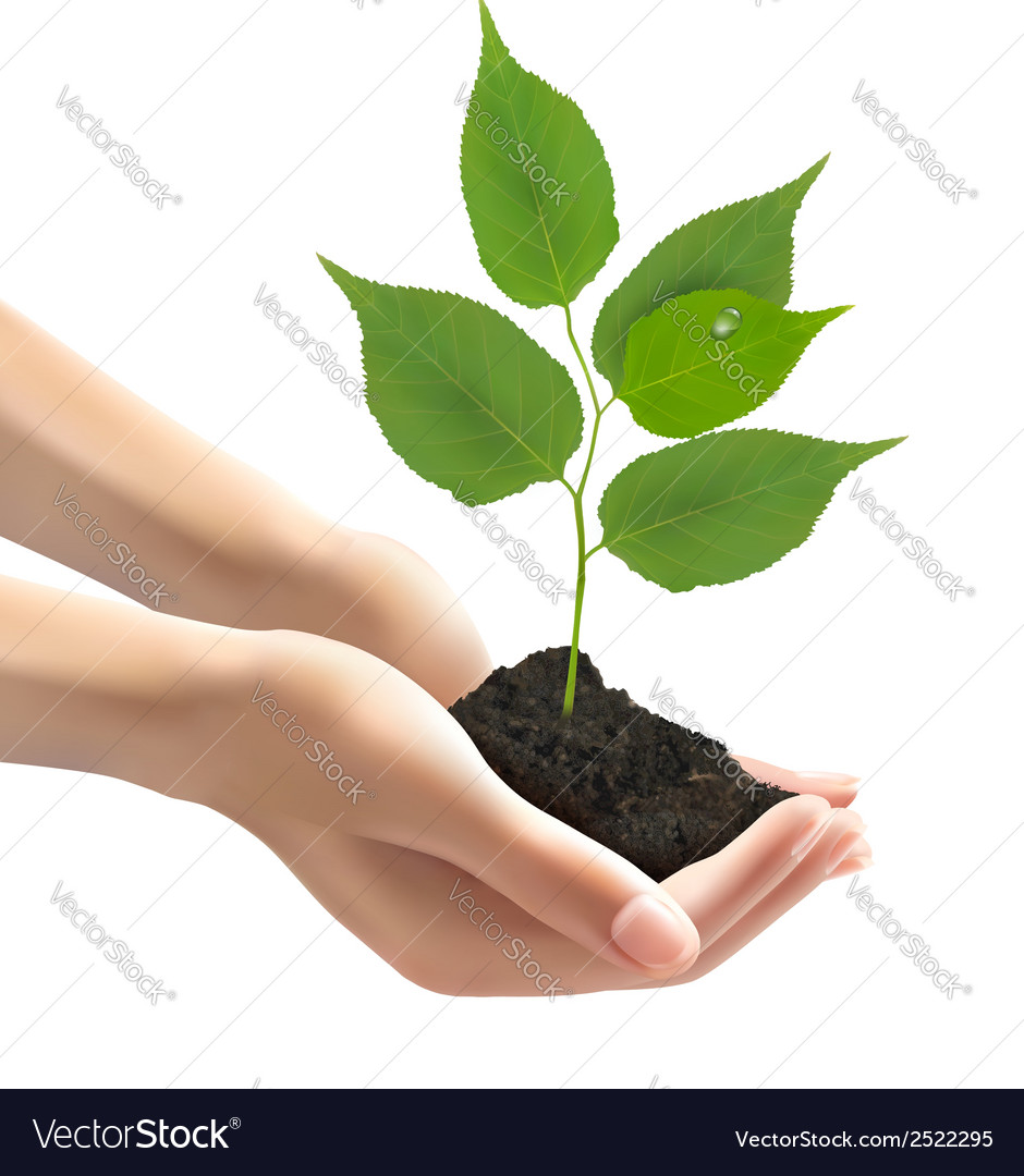 Human hands holding green tree with leaves vector   Price: 1 Credit (USD $1)