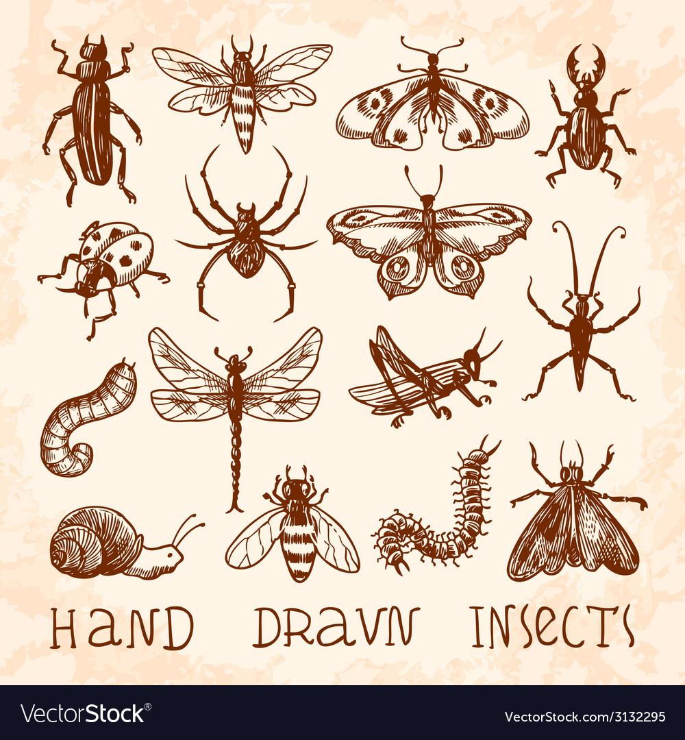 Insects sketch set vector | Price: 1 Credit (USD $1)