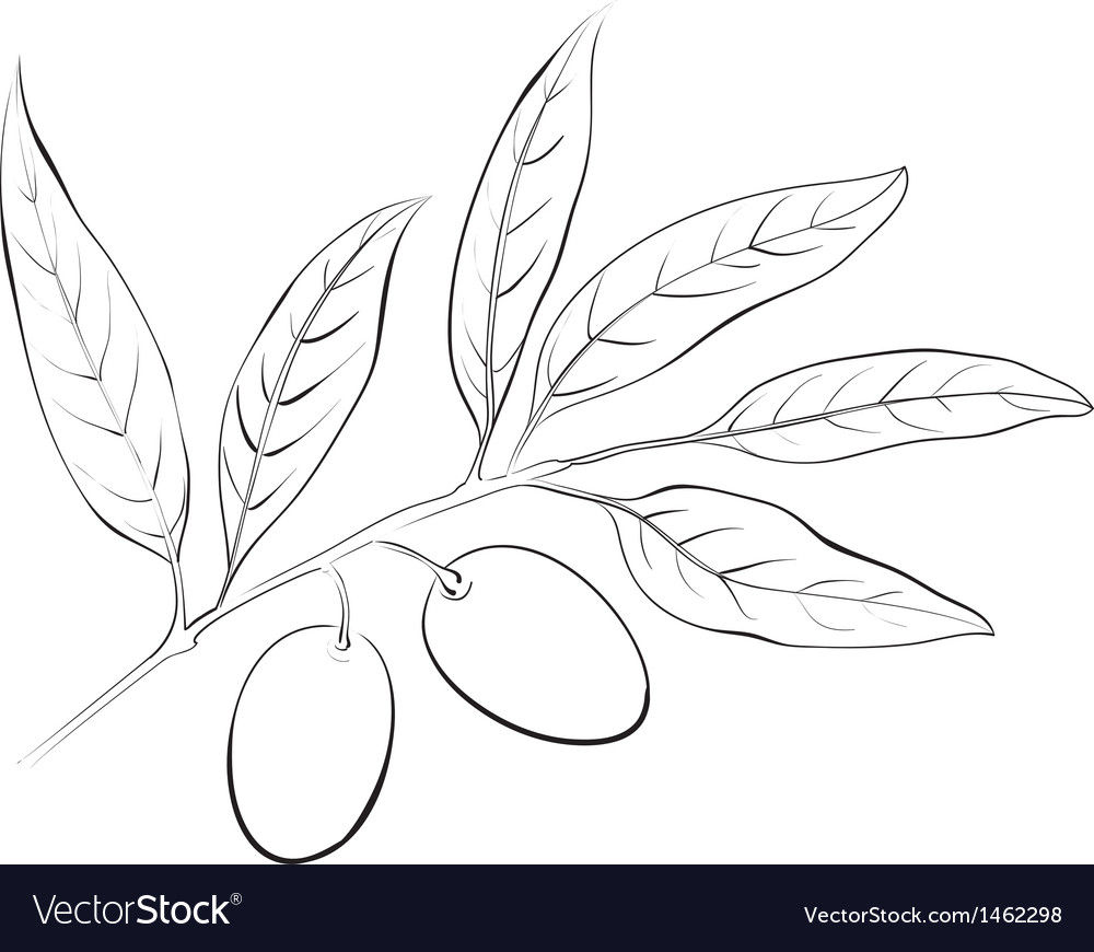 Hand drawn olive branch vector | Price: 1 Credit (USD $1)