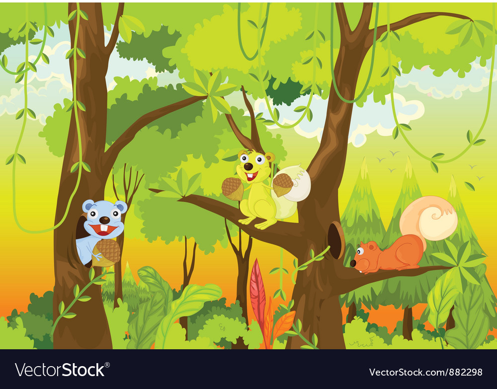 Squirrel forest vector