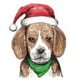 Beagle hat1 vector