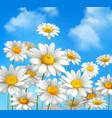Daisies on blue sky vector