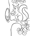 Little cute squirrel with huzelnut vector