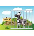 Zebra in cage vector