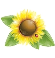 Beautiful sunflower and green leaves isolated vector