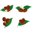 Coffee tree branch vector