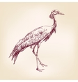 Japanese crane hand drawn llustration realistic vector