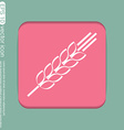 Wheat spike ears icon vector