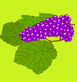 Abstract grape with leafs vector