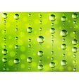 Abstract dew green background vector