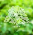 Oak on blurred nature background vector