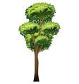 A tall tree vector