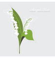 Lily of the valley background vector