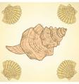 Sketch sea shells in vintage style vector