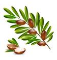 Argan tree branch vector