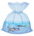 A plastic pouch with two fishes vector