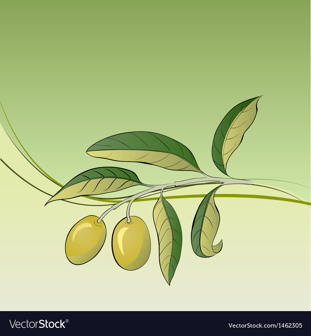 Two olives on branch vector | Price: 1 Credit (USD $1)