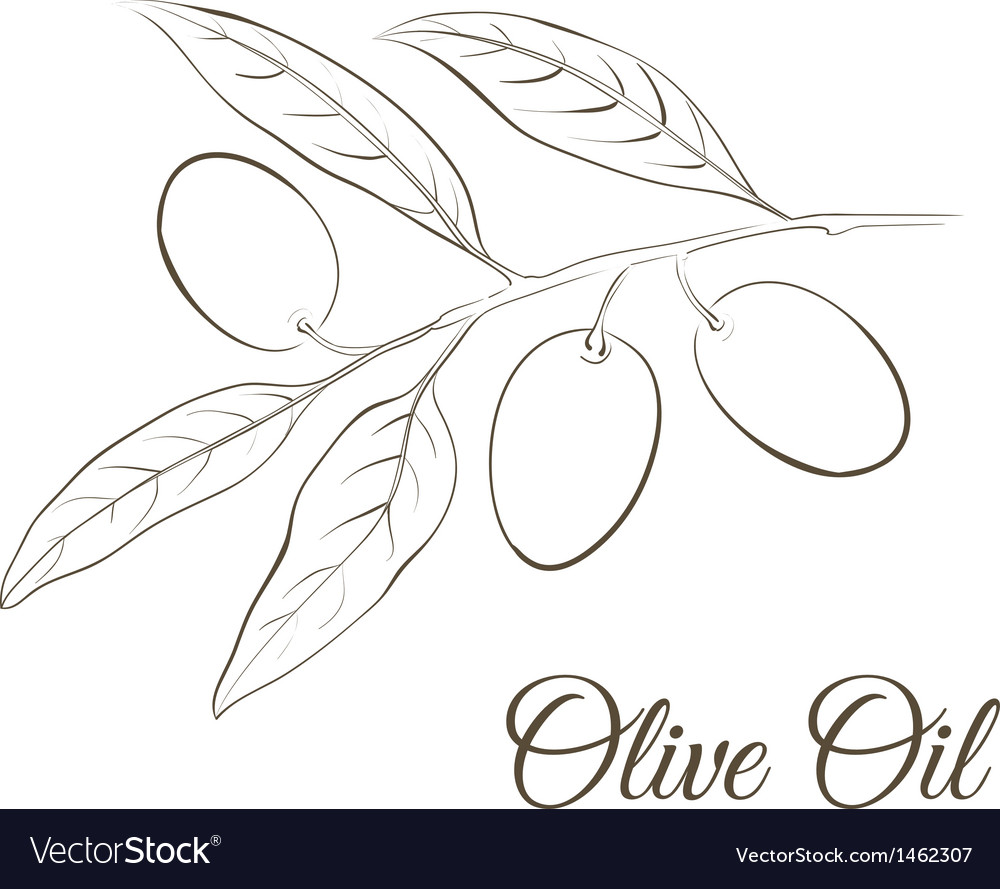 Small twig with black olives vector | Price: 1 Credit (USD $1)