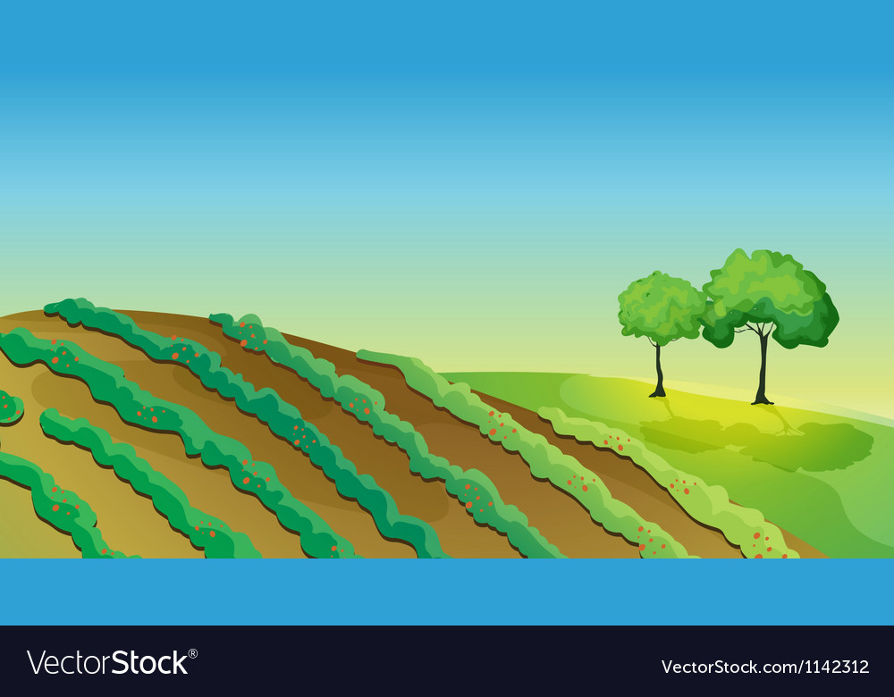 Agricultural land and trees vector | Price: 1 Credit (USD $1)