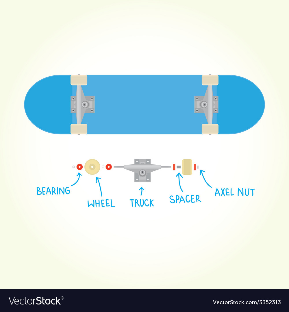 Blank skateboard and parts isolated vector | Price: 1 Credit (USD $1)