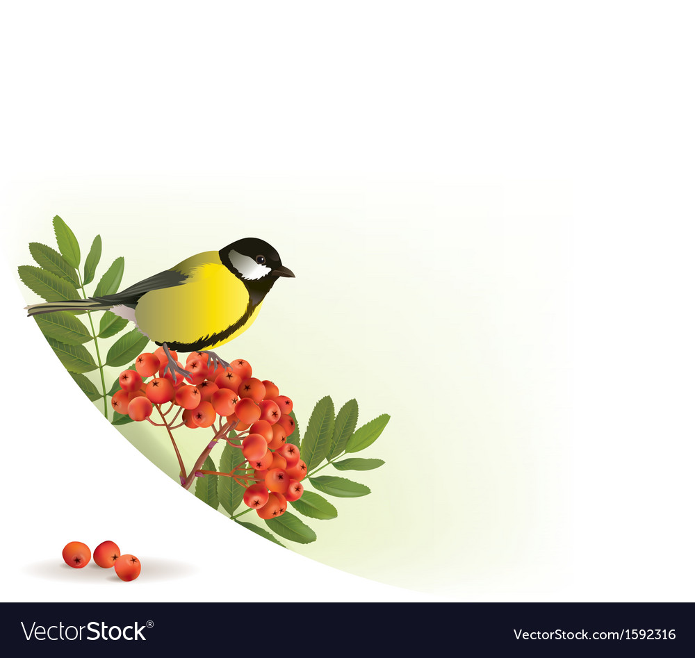 Corner banner with rowan and tomtit vector | Price: 1 Credit (USD $1)