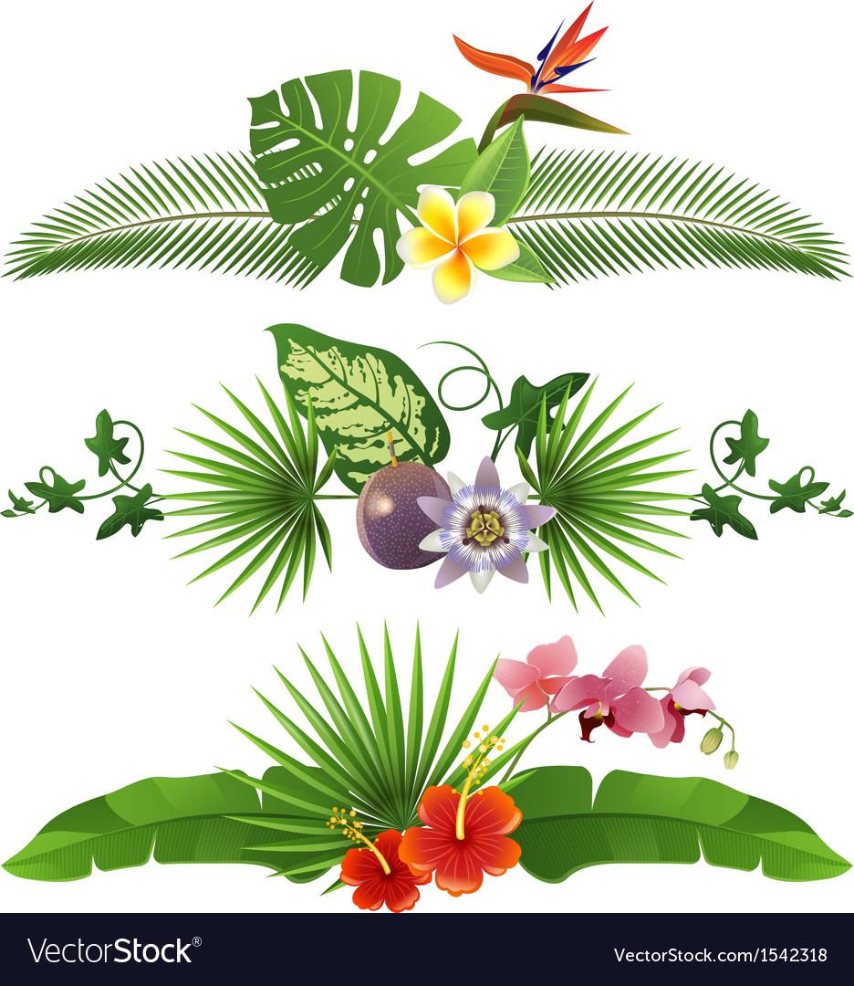 Tropical borders vector | Price: 1 Credit (USD $1)