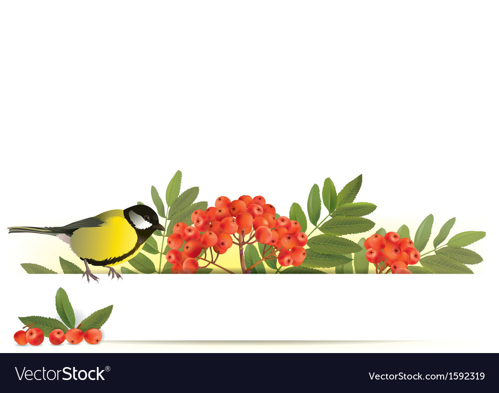 Banner with tomtit and rowan vector | Price: 1 Credit (USD $1)