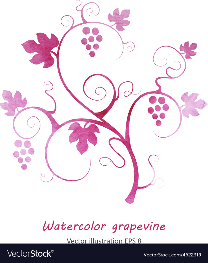 Watercolor style green grapevine vector | Price: 1 Credit (USD $1)