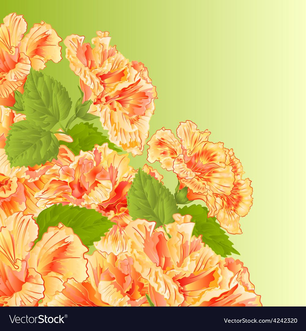 Flowering shrub yellow hibiscus floral background vector | Price: 1 Credit (USD $1)