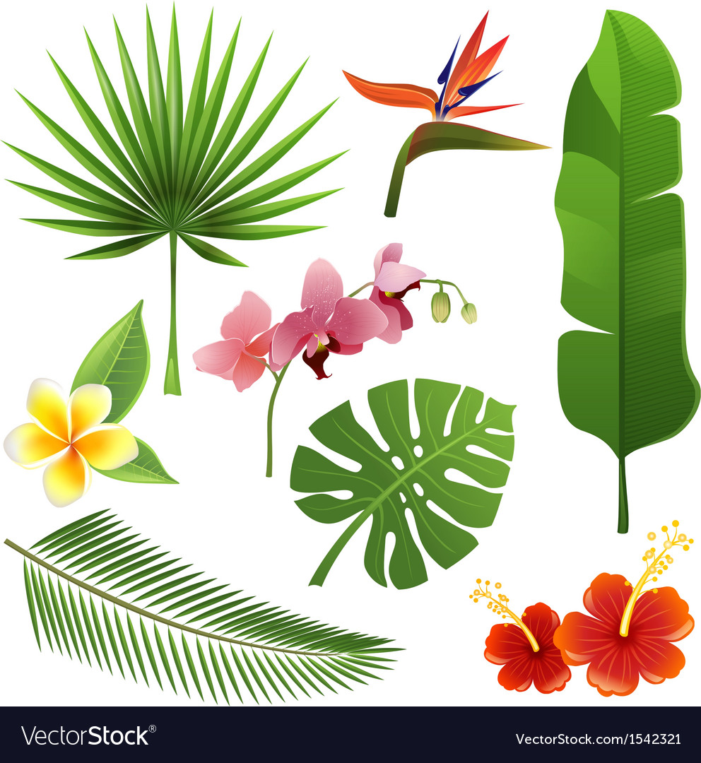 Tropical plants vector | Price: 1 Credit (USD $1)