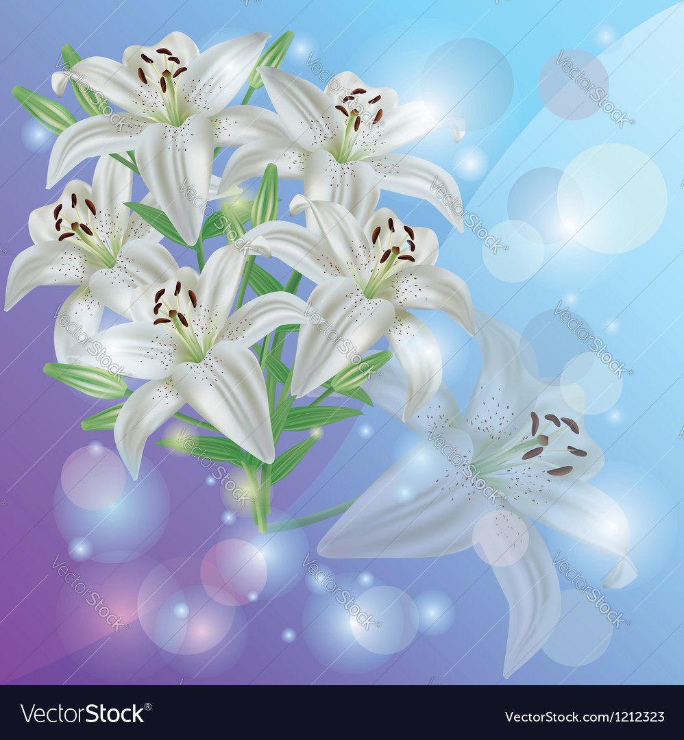 White lily flower background greeting or vector | Price: 1 Credit (USD $1)