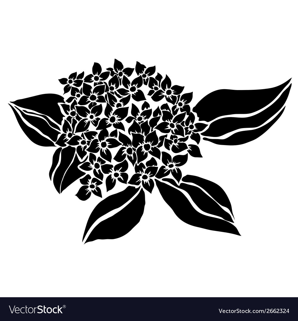Decorative hydrangea vector | Price: 1 Credit (USD $1)