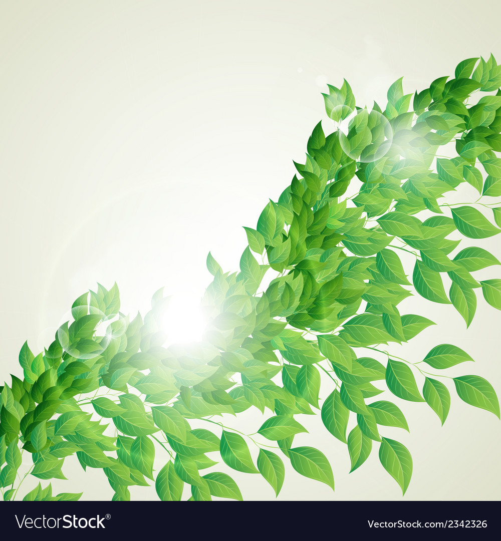 Branch with fresh green leaves vector | Price: 1 Credit (USD $1)