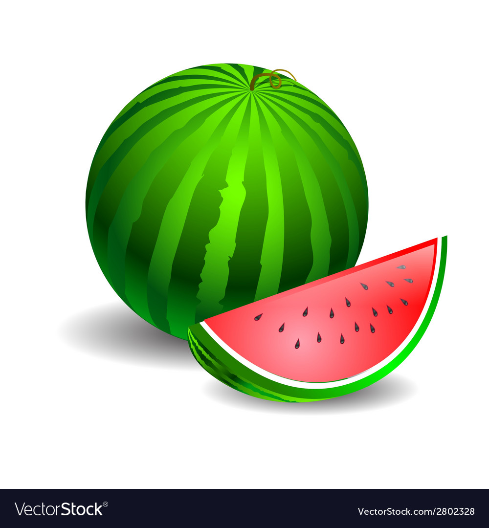 Watermelon green on a white background vector | Price: 1 Credit (USD $1)