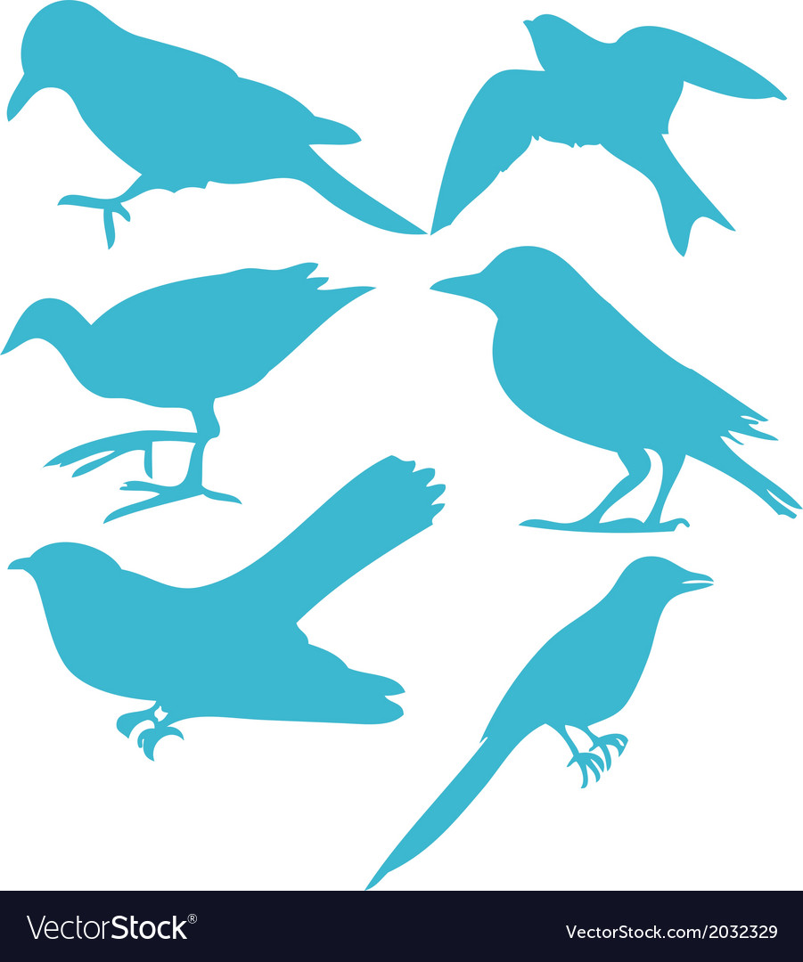 Birds digital clipart 3 vector   Price: 1 Credit (USD $1)
