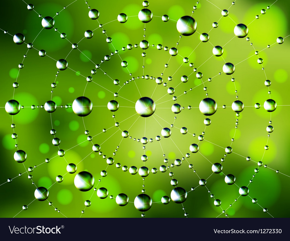 Abstract spider web with dew drops vector | Price: 1 Credit (USD $1)