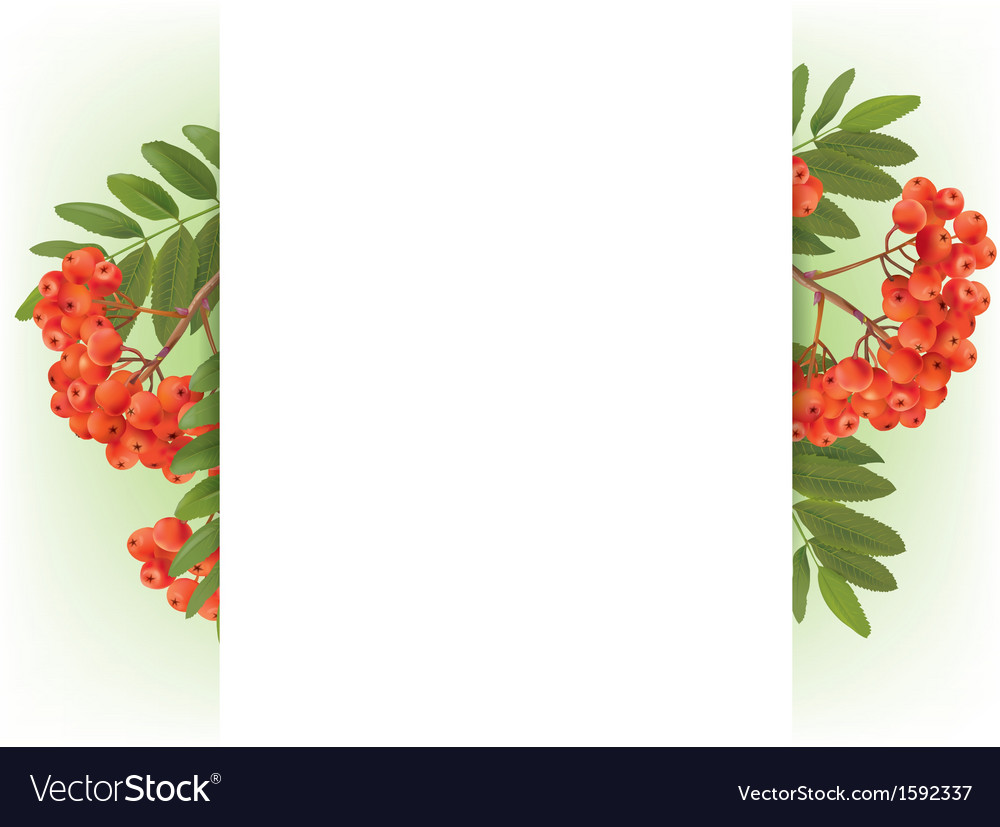Banner with autumn rowan vector | Price: 1 Credit (USD $1)