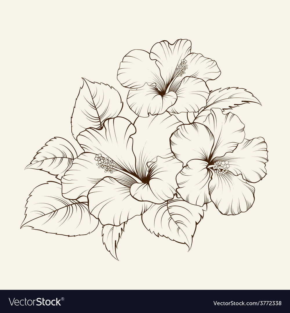 Flower of mallow vector | Price: 1 Credit (USD $1)