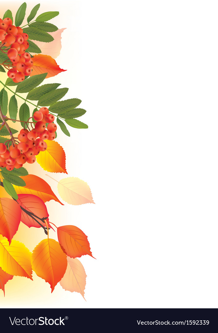 Border of autumn leaves and rowan vector | Price: 1 Credit (USD $1)
