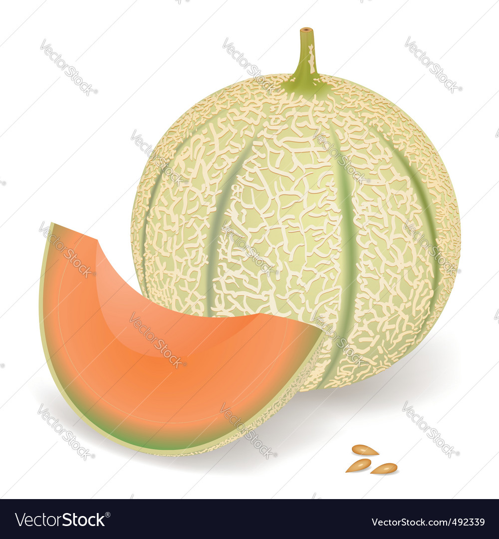Melon vector | Price: 1 Credit (USD $1)