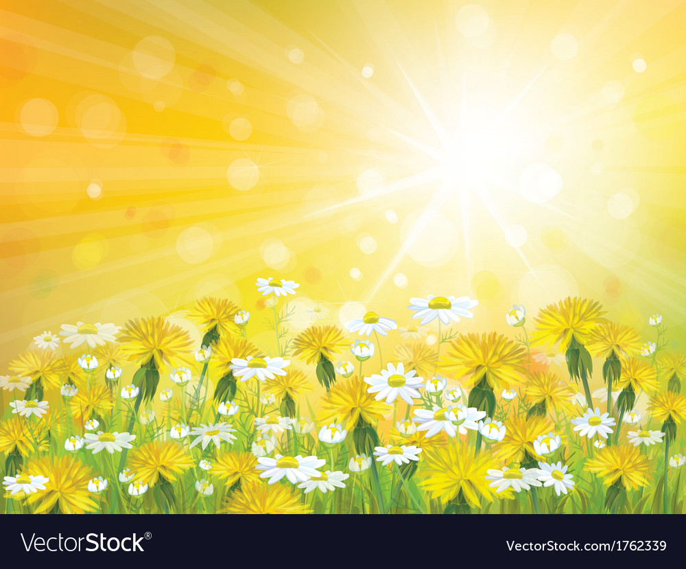 Sun flowers background vector