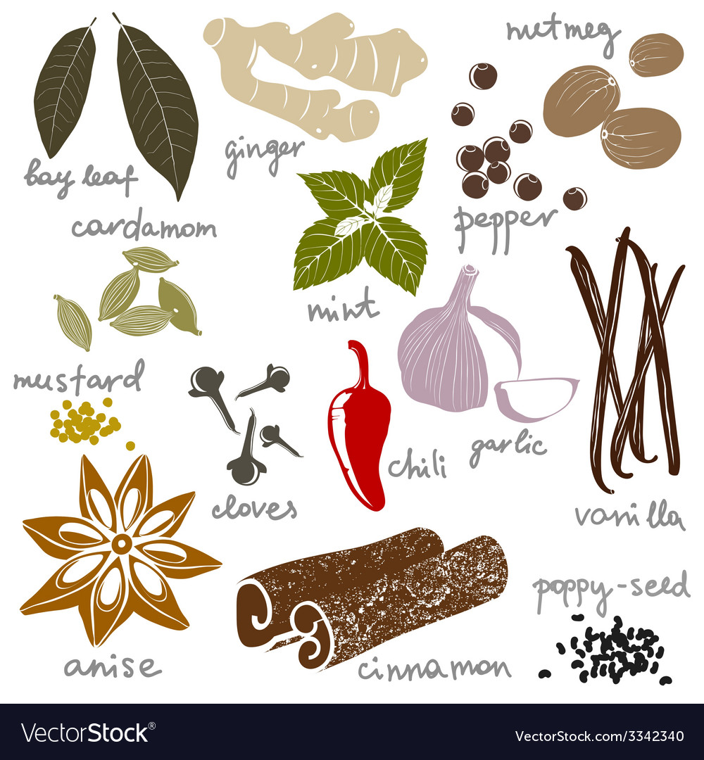 Stylized spices vector | Price: 1 Credit (USD $1)