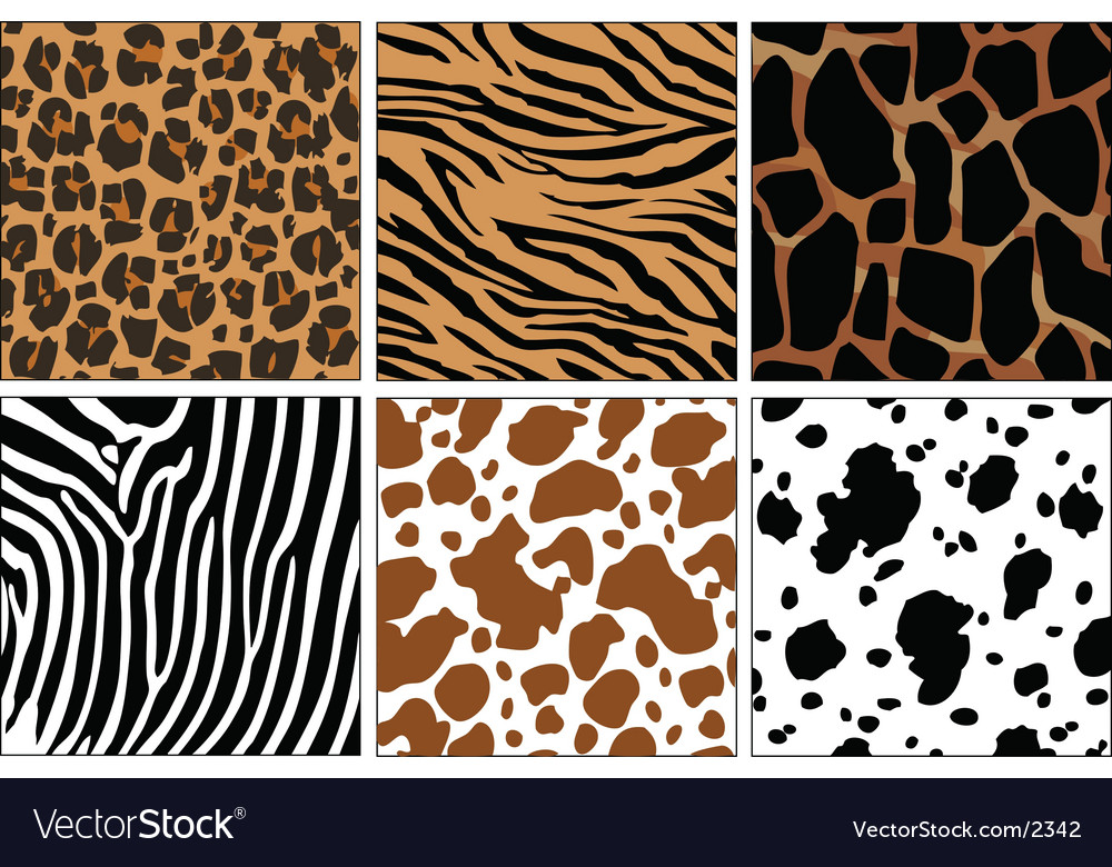 Animal skin prints vector | Price: 1 Credit (USD $1)