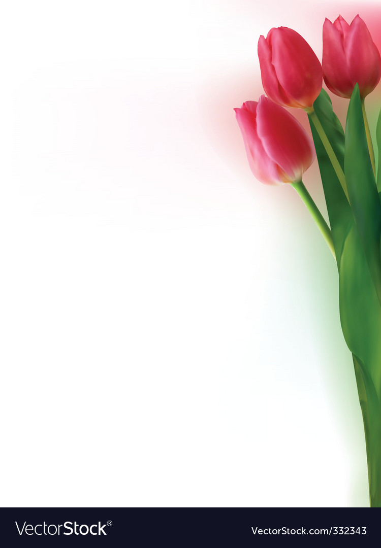 Bouquet of tulips vector | Price: 1 Credit (USD $1)