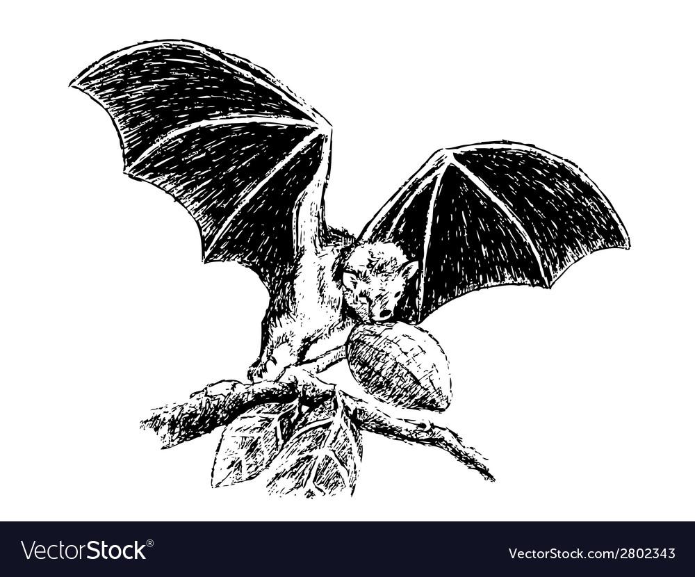 Fruit bat vector   Price: 1 Credit (USD $1)