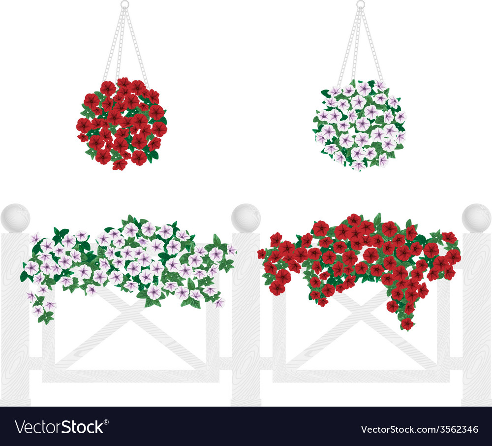 Bushes and flowers in pots and hanging on the vector